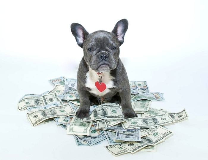 Best Dog Insurance >> Cost Of Owning A Dog: Averages & Most Expensive Breeds